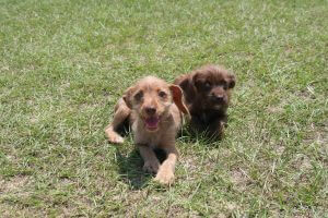(Pictured here: Mavie and Moxie, just two of more than a dozen puppies available for adoption!)