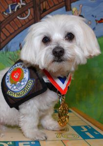 RILEY is a registered therapy dog with the Emerald Coast Children's Advocacy Centers who has earned the highest designation as a Distinguished Therapy Dog by the American Kennel Club.